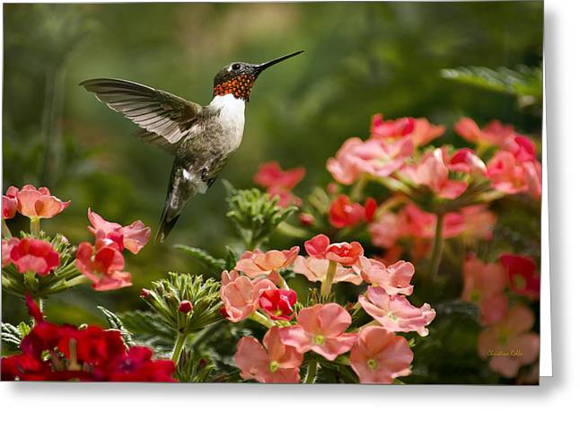 Ruby Throated Hummingbird Greeting Cards - Graceful Garden Jewel Greeting Card by Christina Rollo