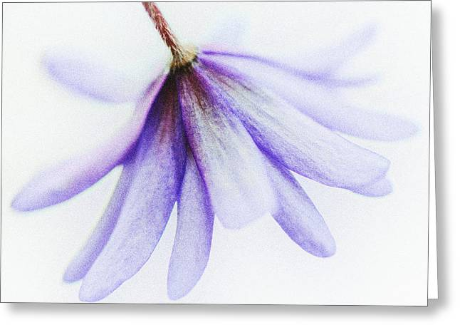 Wildflower Photograph Greeting Cards - Graceful Greeting Card by Heather Bridenstine