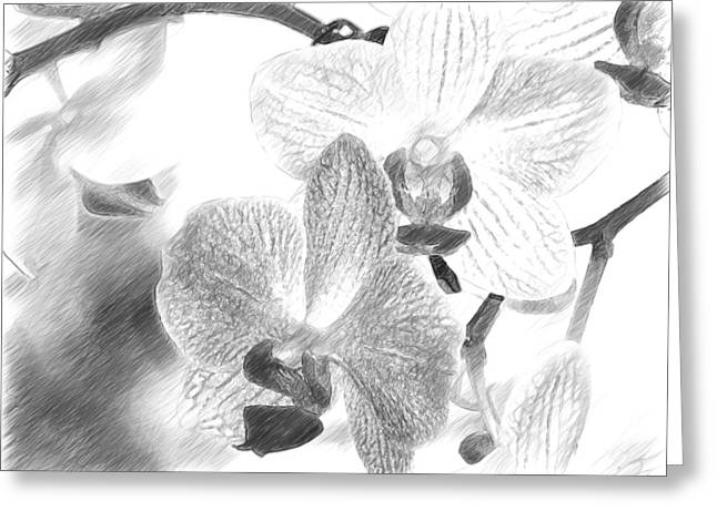 Appreciation Of Art Greeting Cards - Graceful Pair Of Orchids Greeting Card by Peter Chasse