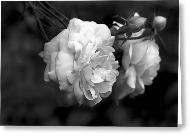 Rose Petals Greeting Cards - Graceful Roses Black and White Greeting Card by Jennie Marie Schell