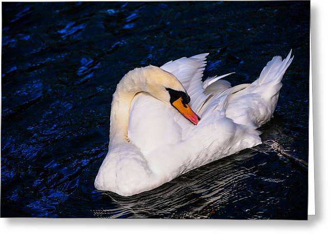 Orange Beak Greeting Cards - Graceful Swan Resting in the Blue Water Greeting Card by Jenny Rainbow