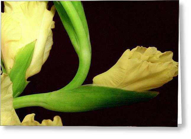 Gladiolas Greeting Cards - Gracefully Dawning Greeting Card by Deborah  Crew-Johnson