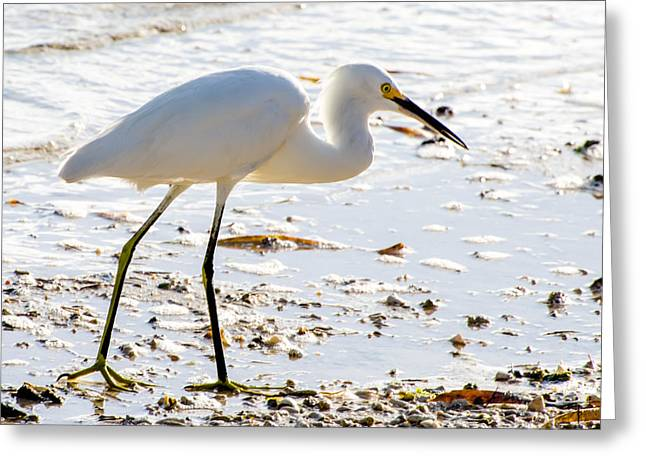 Florida Keys Greeting Cards - Gracefulness Greeting Card by Vaughn Garner