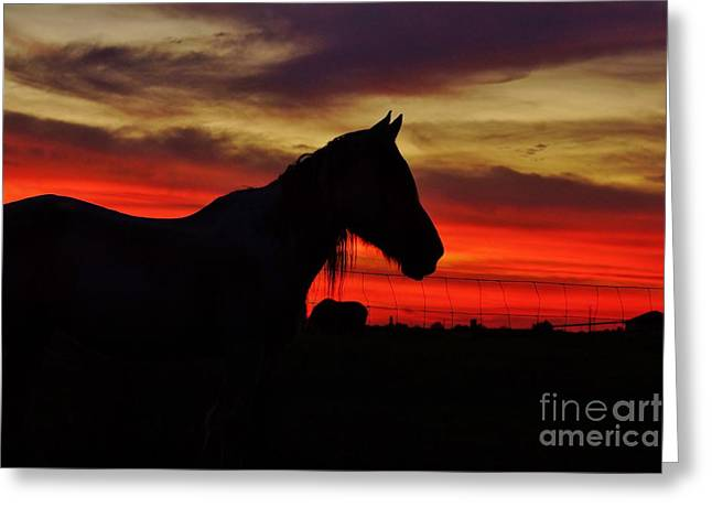 Gracie At Sunset Greeting Card by Lynda Dawson-Youngclaus