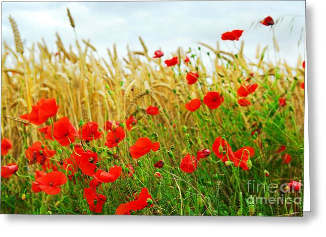 Meadow Photographs Greeting Cards - Grain and poppy field Greeting Card by Elena Elisseeva