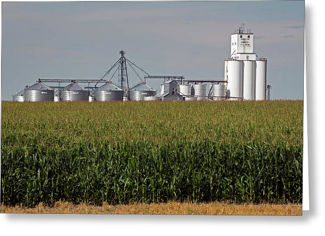 Grain Elevator And Maize Field Greeting Card by Jim West