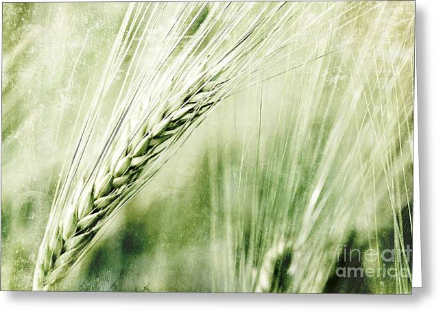 Cereal Digital Art Greeting Cards - Grain Greeting Card by Jana Behr