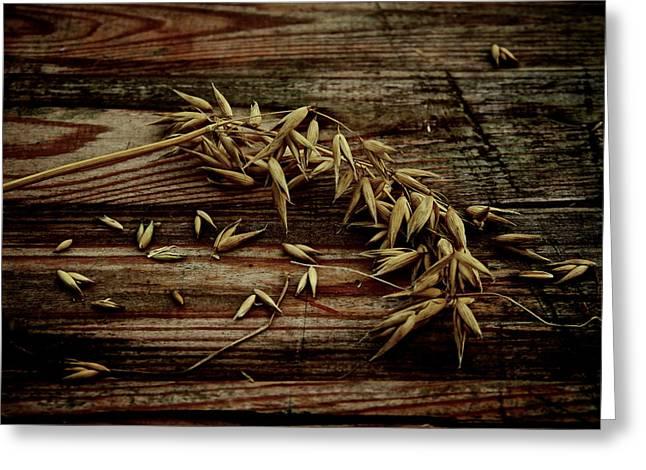 Grain Greeting Card by Odd Jeppesen