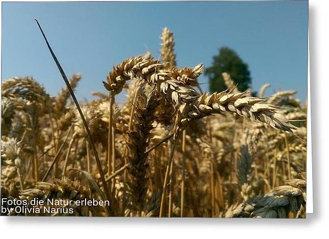 Grain Photography Greeting Card by Olivia Narius