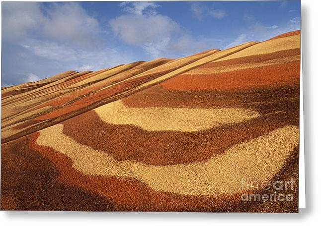 Milo Greeting Cards - Grain Greeting Card by Ron Sanford