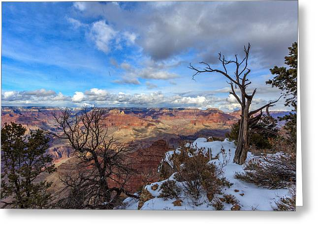 South For The Winter Greeting Cards - Grand Canyon and Dead Tree Greeting Card by Chris Harman