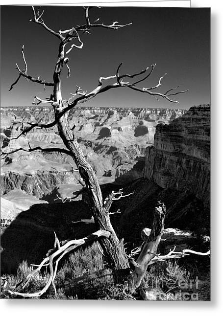 Grand Canyon Bw Greeting Card by Patrick Witz