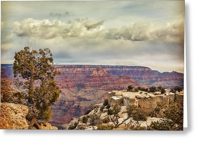 Tree Roots Greeting Cards - Grand Canyon Greeting Card by Colin and Linda McKie