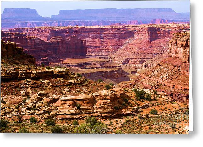 Slickrock Greeting Cards - Grand Canyon Of Utah Greeting Card by Adam Jewell