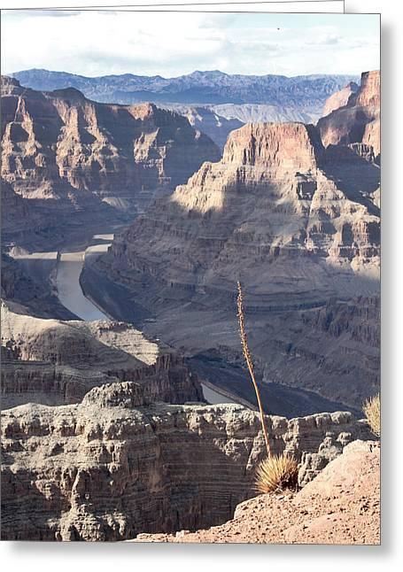 Grand Canyon Greeting Card by Yosi Cupano
