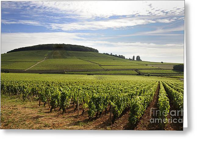Grapevine Photographs Greeting Cards - Grand cru and premier cru vineyards of Aloxe Corton. Cote de Beaune. Burgundy. Greeting Card by Bernard Jaubert