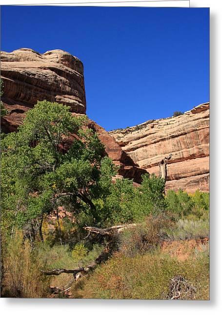 Gatherers Greeting Cards - Grand Gulch Canyon Greeting Card by Aidan Moran