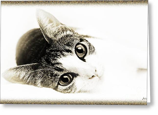 Cute Kitten Greeting Cards - Grand Kitty Cuteness 3 High Key Greeting Card by Andee Design