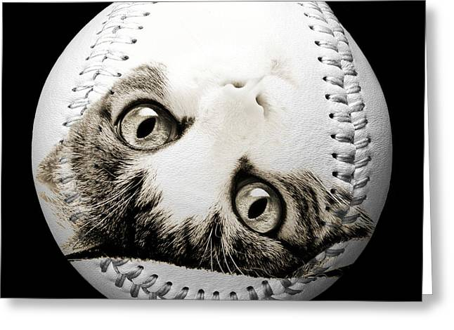 Take-out Mixed Media Greeting Cards - Grand Kitty Cuteness Baseball Square B W Greeting Card by Andee Design