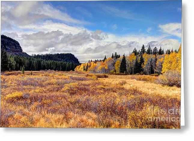 Fall Grass Greeting Cards - Grand Mesa Colors Greeting Card by Bob Hislop