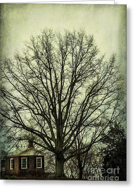 Monticello Greeting Cards - Grand Old Tree Greeting Card by Terry Rowe