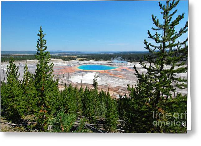 Hot Springs Yellowstone Midway Hot Springs Yellowstone Hot Greeting Cards - Grand Prismatic Between Trees Greeting Card by Debra Thompson