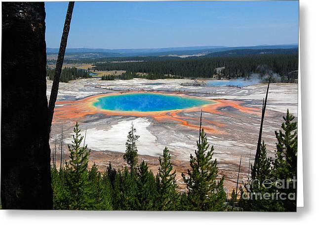 Hot Springs Yellowstone Midway Hot Springs Yellowstone Hot Greeting Cards - Grand Prismatic Spring from Hillside Greeting Card by Debra Thompson