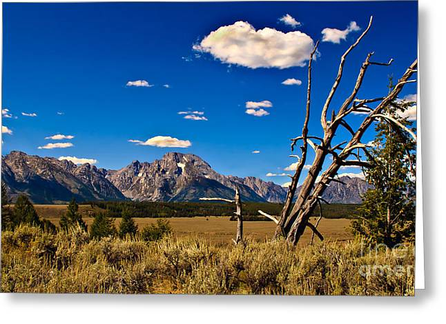 Outlook Greeting Cards - Grand Tenton Overlook Greeting Card by Robert Bales