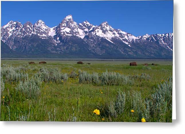 Grand Teton Bison Greeting Card by Brian Harig