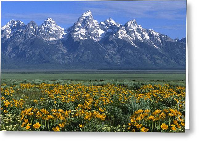 Wildflower Fine Art Greeting Cards - Grand Teton Summer Greeting Card by Sandra Bronstein