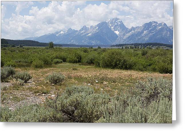Willow Lake Greeting Cards - Grand Tetons from Willow Flats Greeting Card by Belinda Greb