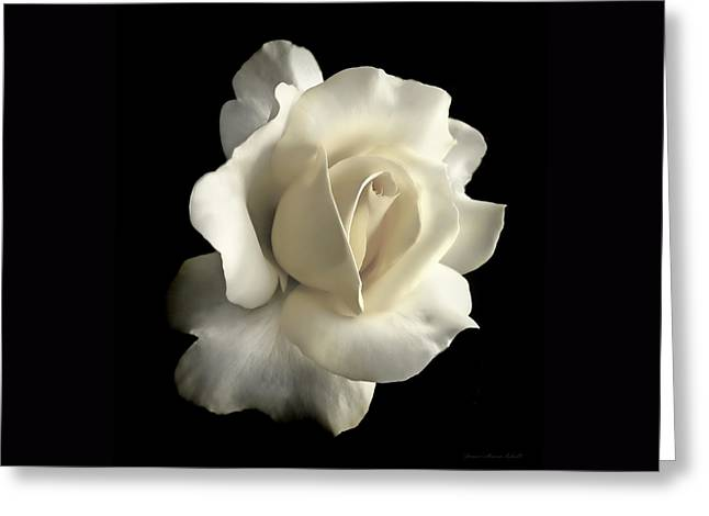 Grandeur Ivory Rose Flower Greeting Card by Jennie Marie Schell