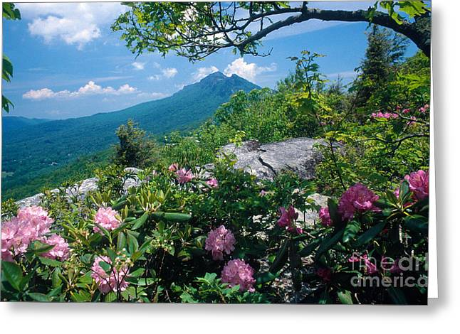 Grandfathers Greeting Cards - Grandfather Mountain Greeting Card by Bruce Roberts