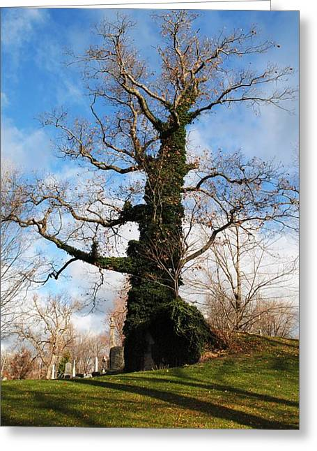 Esem8chart.com Greeting Cards - Grandfather Tree Greeting Card by Sarah Holenstein