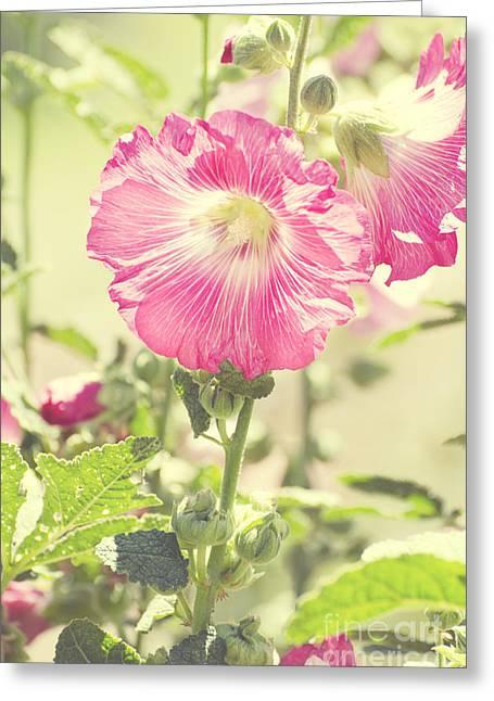 Alcea Rosea Greeting Cards - Grandmas Hollyhocks Greeting Card by Jim and Emily Bush