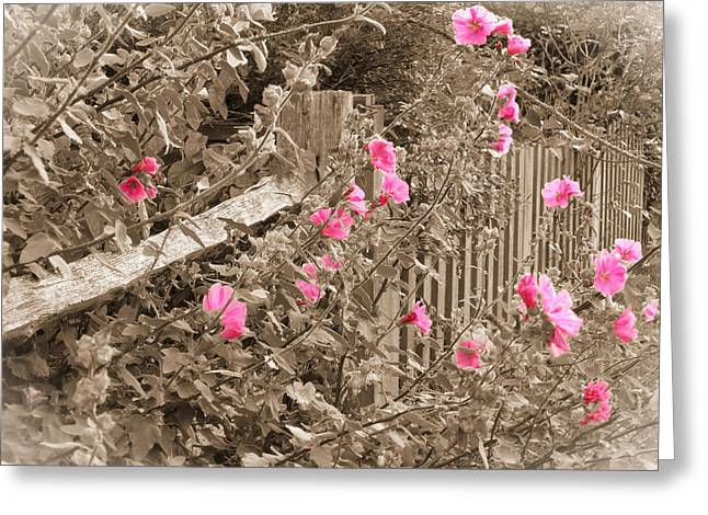 Mallow Greeting Cards - In Grandmothers Garden Greeting Card by Connie Handscomb