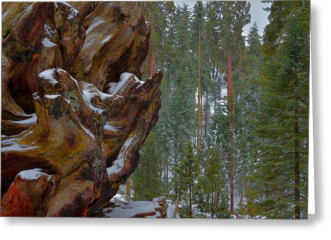 Kings Canyon National Park Greeting Cards - Grant Grove - Kings Canyon Greeting Card by Stephen  Vecchiotti