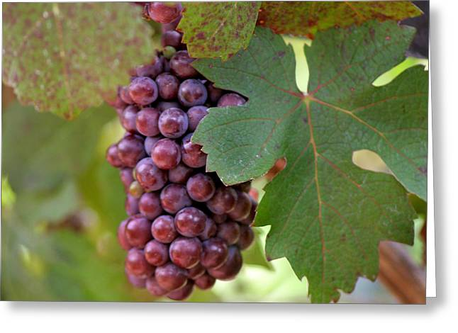 Grape Vineyard Greeting Cards - Grape Bunch Greeting Card by Art Block Collections