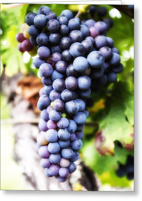 Ripe Grapes Greeting Cards - Grape Cluster Greeting Card by Nomad Art And  Design