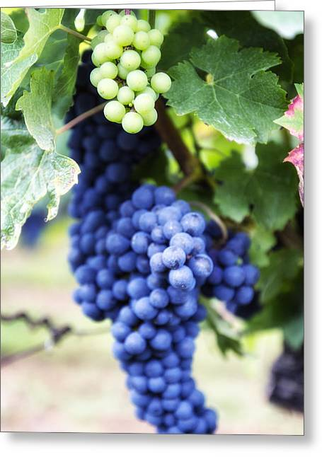 Ripe Grapes Greeting Cards - Grape Day Greeting Card by Nomad Art And  Design