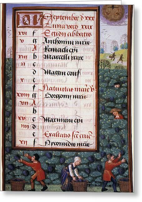 Grape Harvest, 1500 Greeting Card by Granger