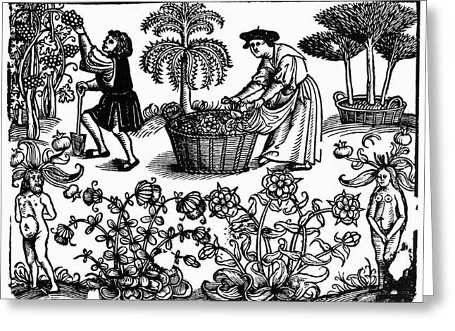 Grape Harvest, 1576 Greeting Card by Granger