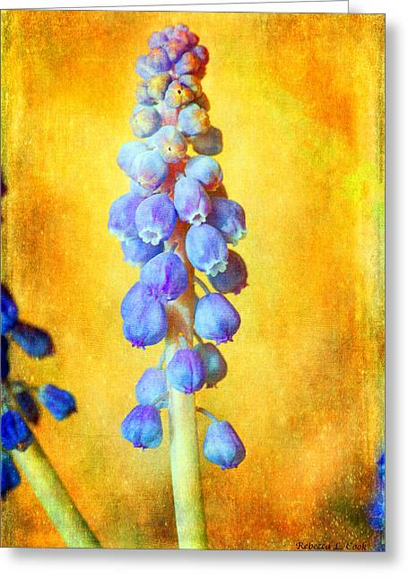 Spring Bulbs Mixed Media Greeting Cards - Grape Hyacinth Greeting Card by Bellesouth Studio