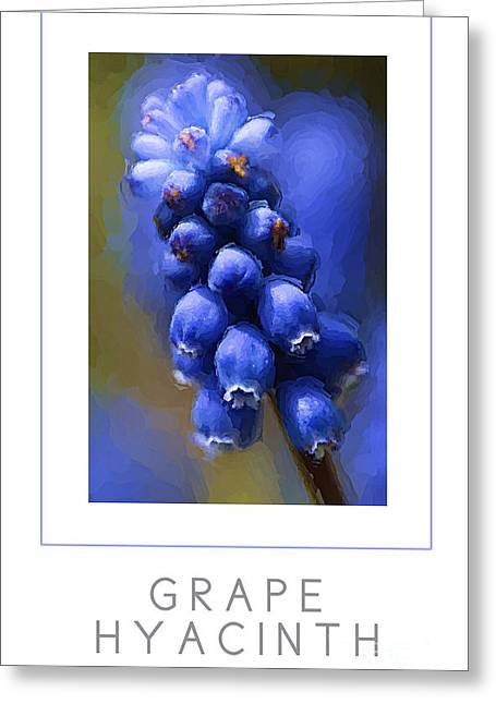 Hyacinthe Greeting Cards - Grape Hyacinth poster Greeting Card by Mike Nellums