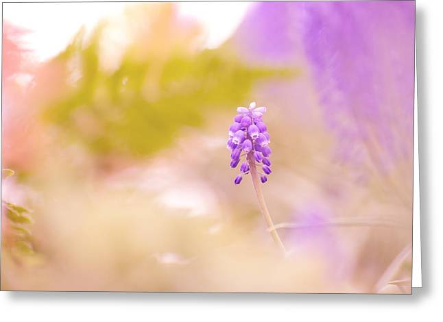 Blue Grapes Pyrography Greeting Cards - Grape hyacinth  Greeting Card by Vincent  Dale
