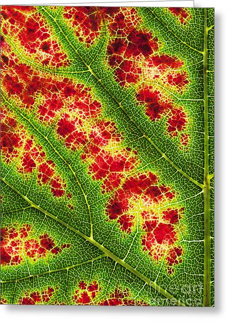 Nero Greeting Cards - Grape Leaf Pattern Greeting Card by Tim Gainey