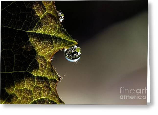Grape Leaf with Rain Drop Greeting Card by Cindi Ressler
