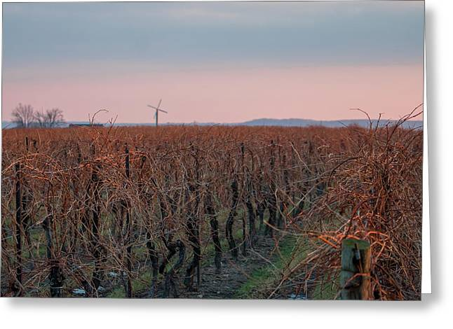 Grapevines Greeting Cards - Grape Regeneration Greeting Card by Sascha Duentsch