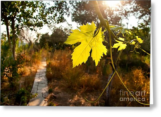 Vine Leaves Greeting Cards - Grape Vine By A Path In A Garden Greeting Card by Leyla Ismet