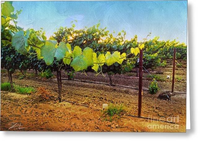 Wine Grapes Mixed Media Greeting Cards - Grape Vine in the Vineyard Greeting Card by Shari Warren